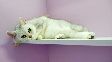 Фото кошек в гостинице для кошек Cat Lounge