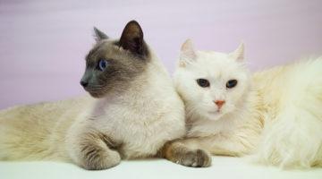 Две кошки в гостинице для кошек Cat Lounge