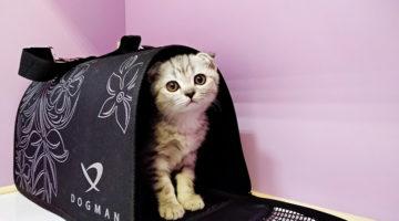 Временная передержка кошек Cat Lounge