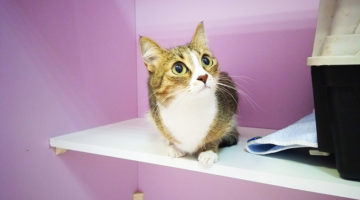 Гостиница для котов Cat Lounge