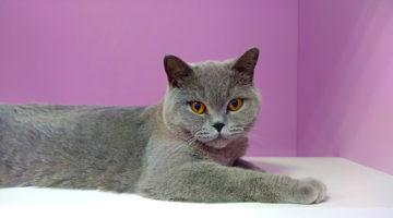 Гостиница для кошек Угрешская Cat Lounge