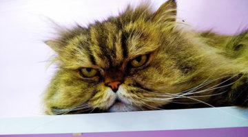 Гостиница для котят Cat Lounge
