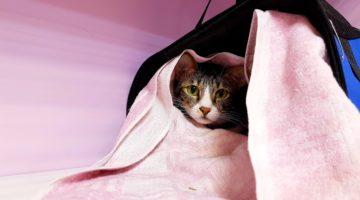 Гостиница для кошек и котов Cat Lounge
