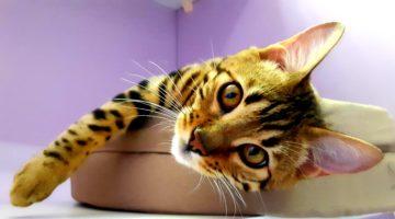 Уютная гостиница для кошек Cat Lounge