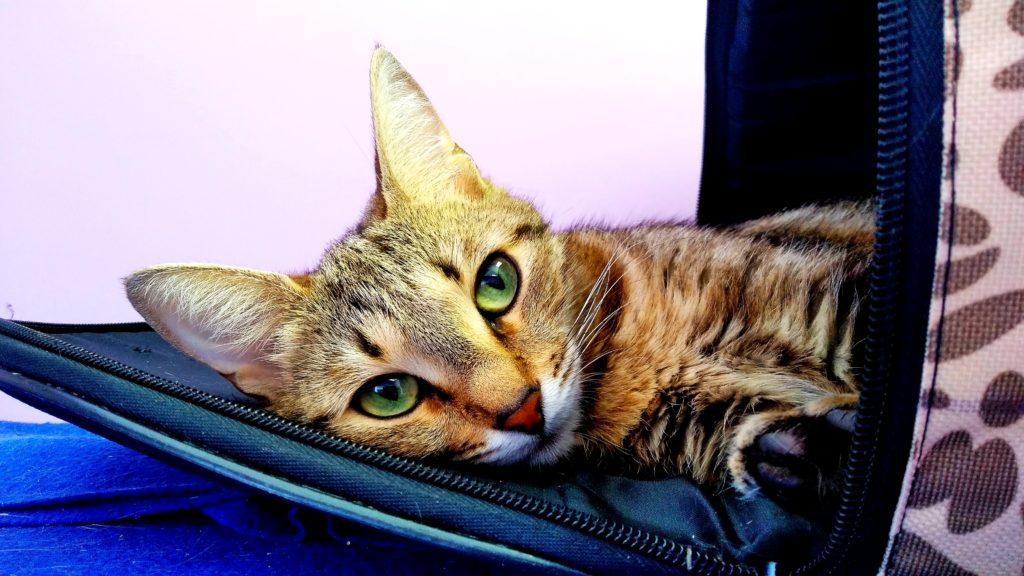 Гостиница для кошек дешево Cat Lounge