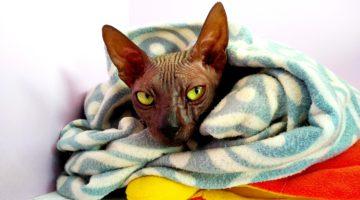 Кот гостиница Cat Lounge