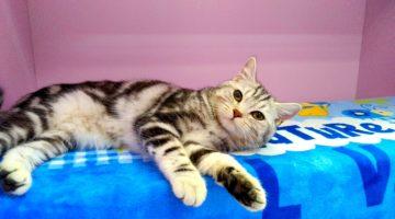 Коты в гостинице для кошек Cat Lounge