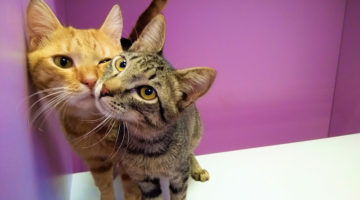 Гостиница для кошек Cat Lounge