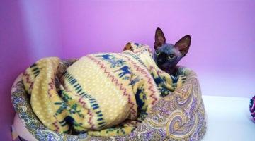 Гостиница для кошек в Москве Cat Lounge