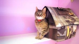Передержка кошек Cat Lounge