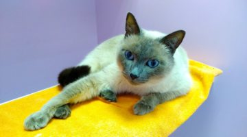 Чистая Гостиница для кошек Cat Lounge