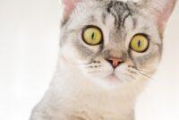 как кошки переносят гостиницу для животных