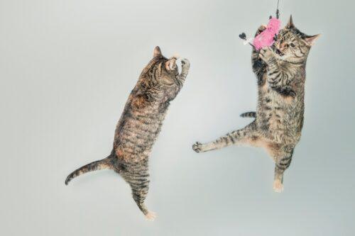 Какие игрушки любят кошки