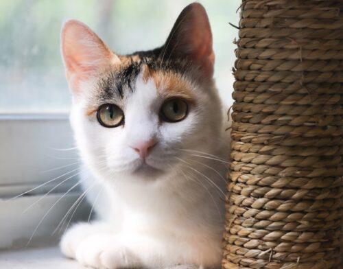 как приучить котенка к лотку котенка
