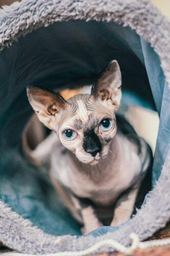 как приучить кошку к переноске