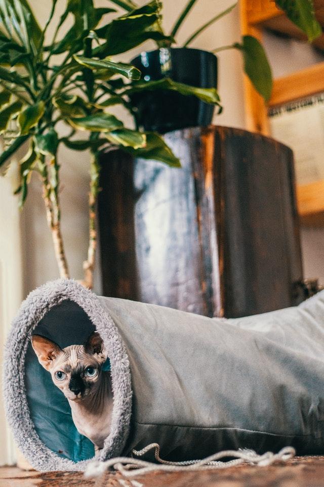 как приучить кота к переноске