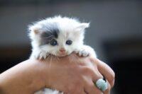 кошка не кормит новорожденных котят что делать