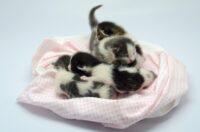 Почему кошка не кормит новорожденных котят
