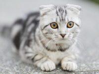 нужно ли подстригать когти кошкам
