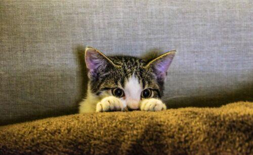 можно ли кошкам подстригать когти