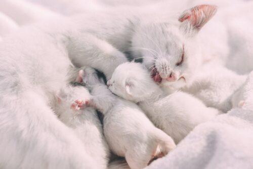 Почему кошка не кормит котят