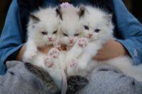 кошка отказывается кормить новорожденных котят что делать