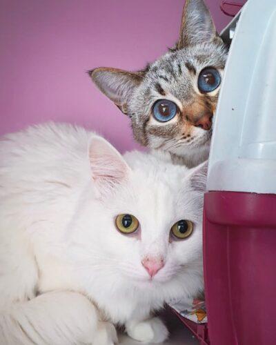 Адаптация в гостинице для кошек