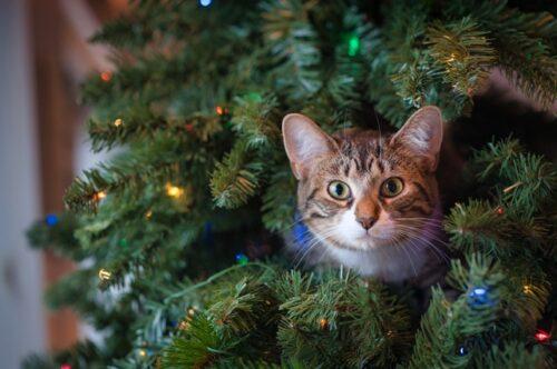 Новый год в гостинице для кошек
