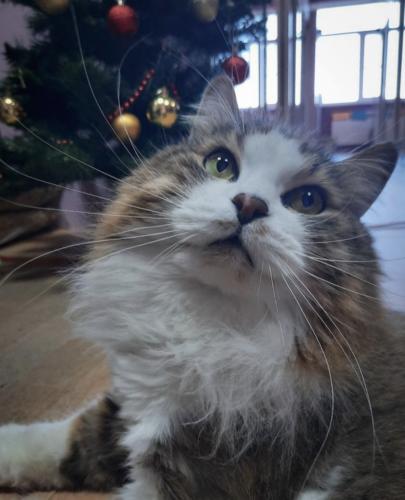 гостиница для кошек на новый год