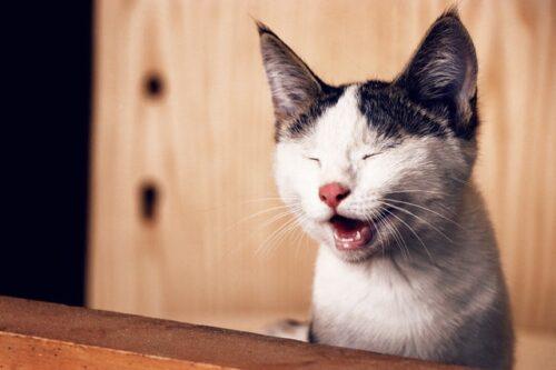 почему кошка шипит на человека