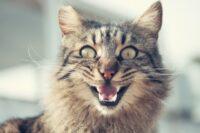 почему кошки плачут во сне