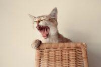 почему кошка шипит на определенного человека