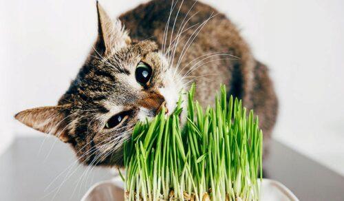 кошки едят растения